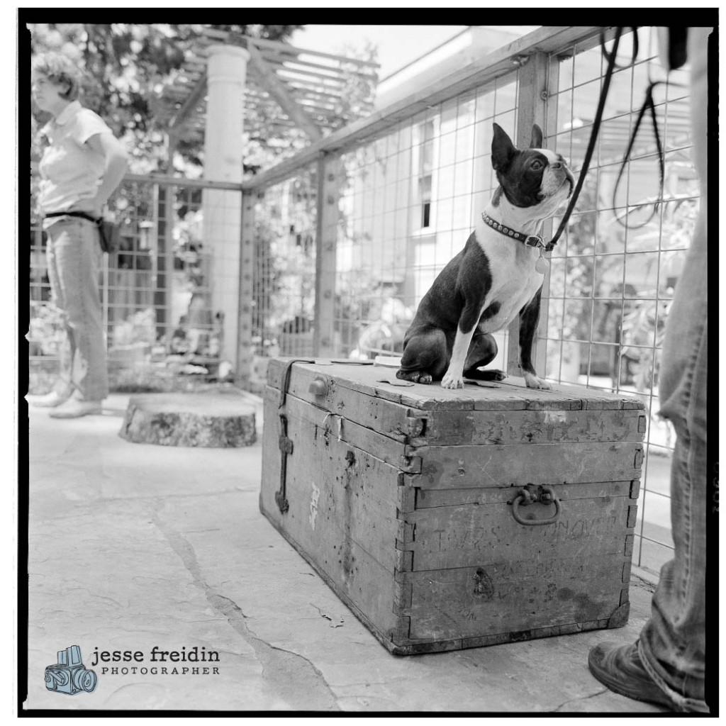 dog circus photo