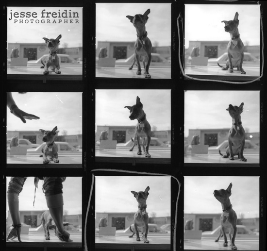 contact sheet in the darkroom