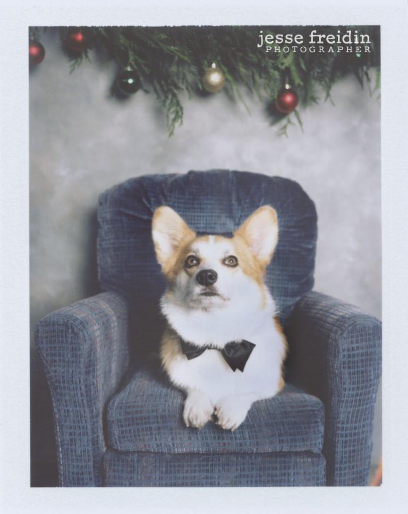 Christmas Dog Photos- Polaroid Doggie Photobooth Corgi