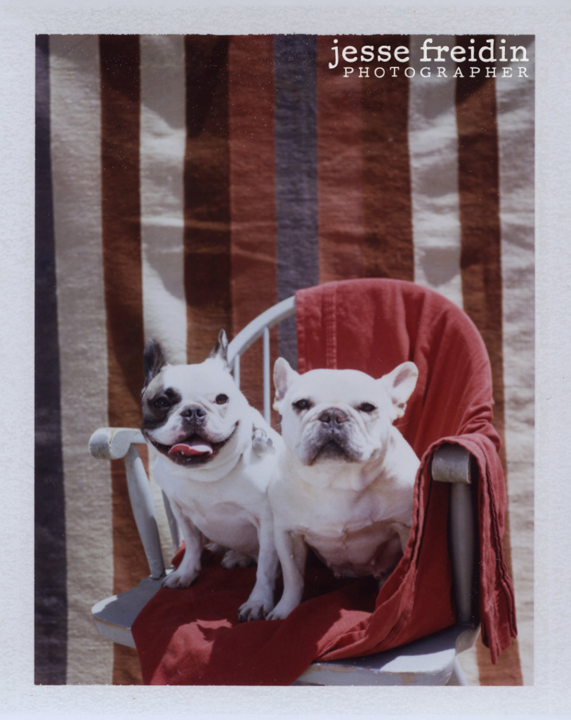 doggie photobooth
