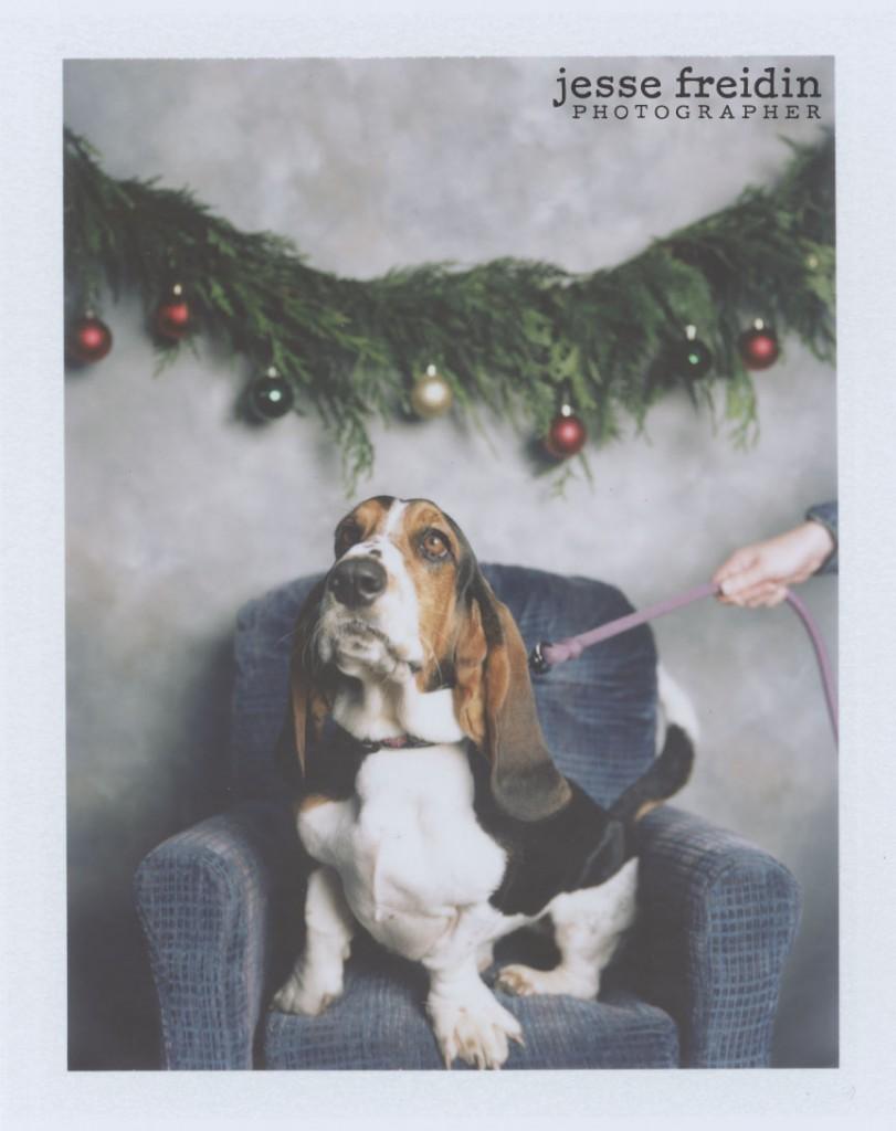 basset hound polaroid christmas