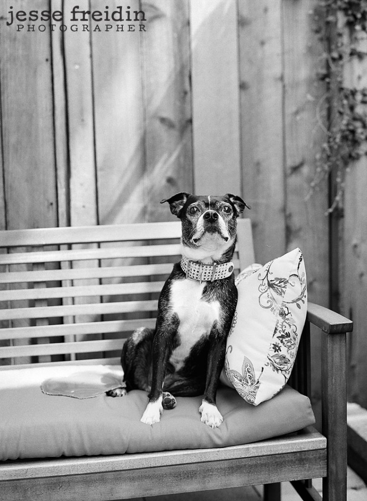 pet photography in los angeles by jesse freidin