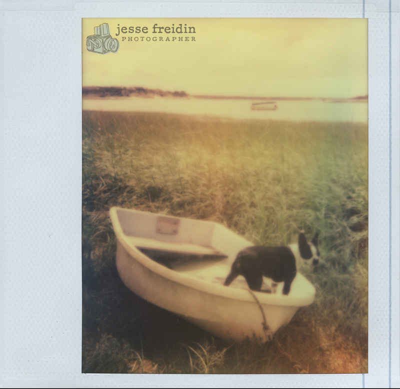 polaroid dog photo
