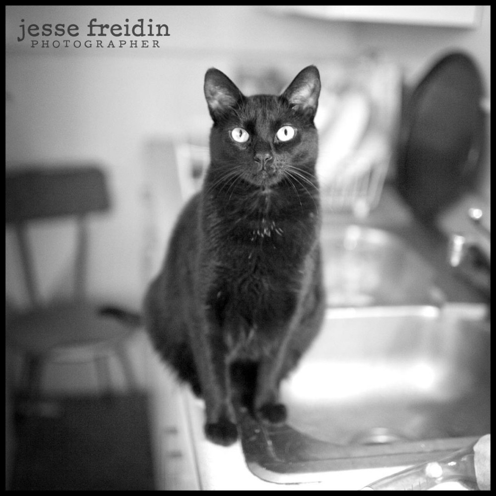 Fine Art Cat Photographer Freidin
