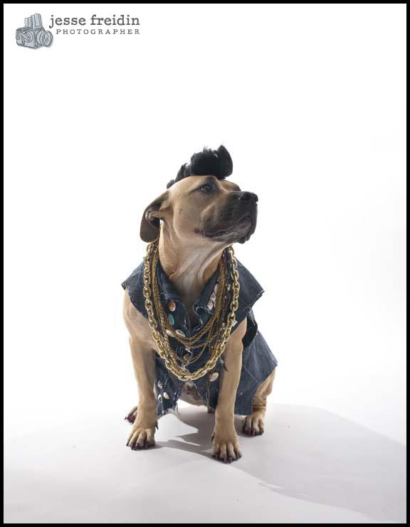 san francisco pet dog photographer