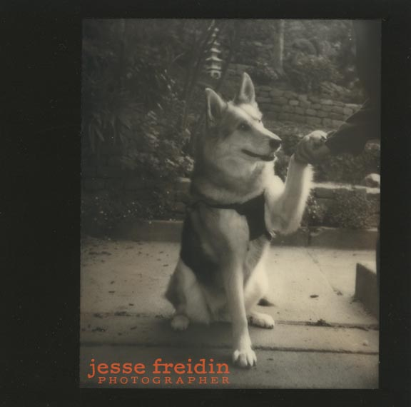 instant dog photo