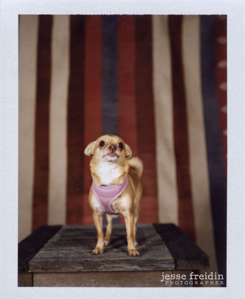 polaroid dog photo booth