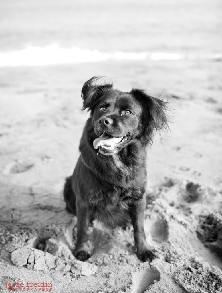 Jesse Freidin Dog Photographer