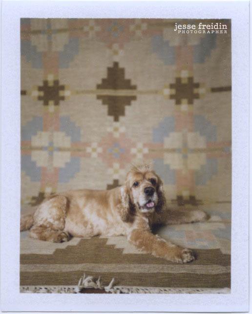 Doggie Photobooth by Jesse Freidin