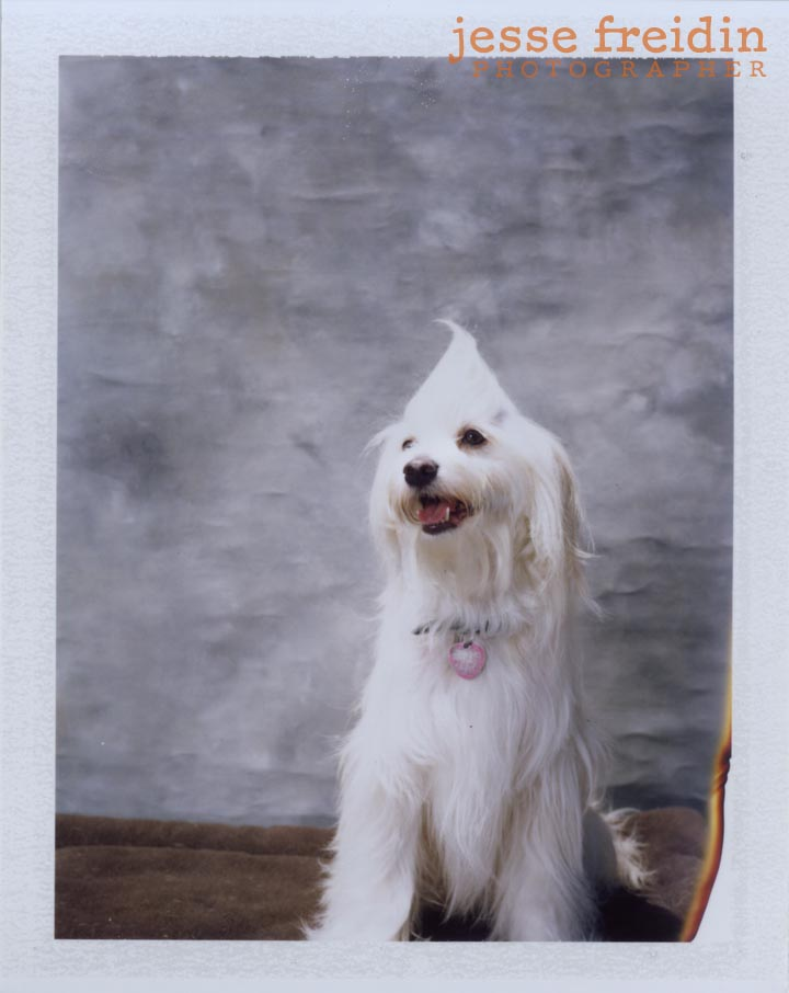 polaroid doggie photobooth