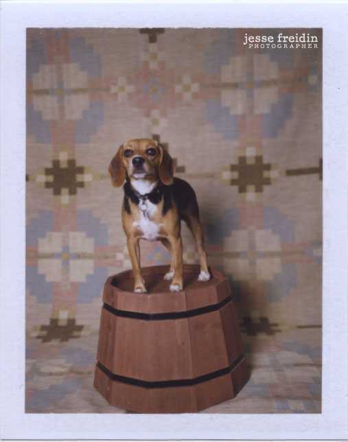 Polaroid Dog Photobooth by Jesse Freidin
