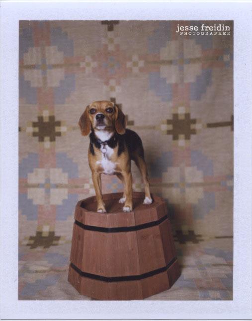 Polaroid Dog Photobooth by Jesse Freidin