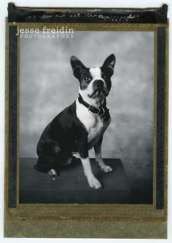 Polaroid dog photograph