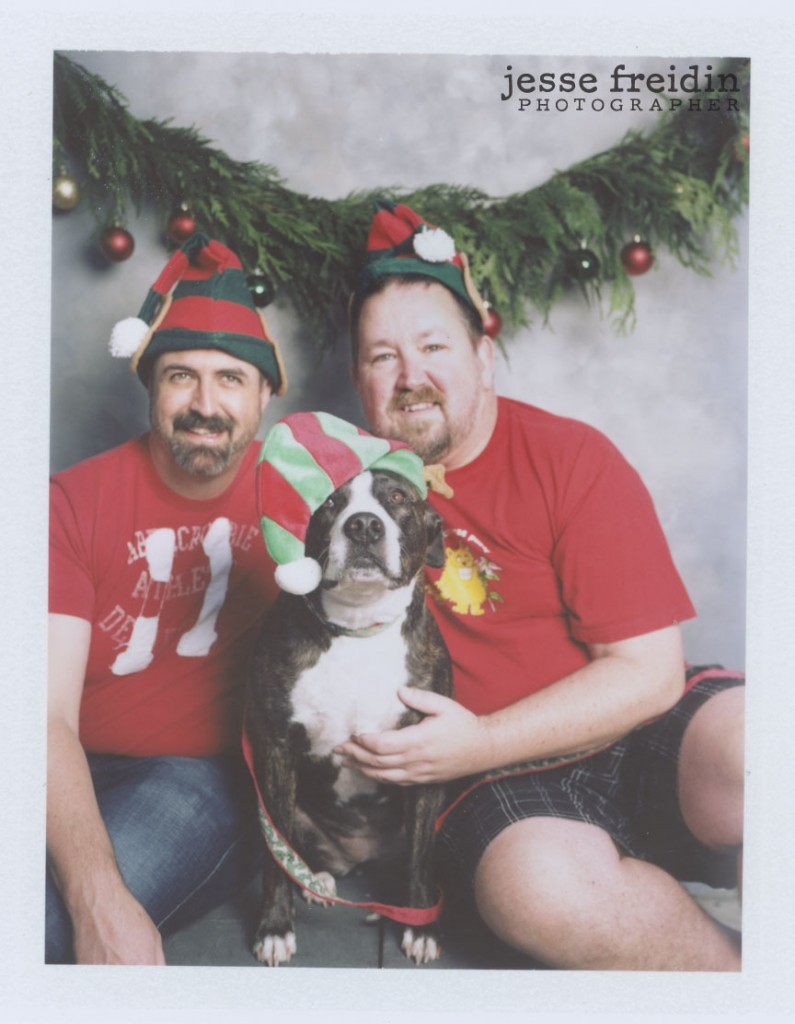 holiday dog photos
