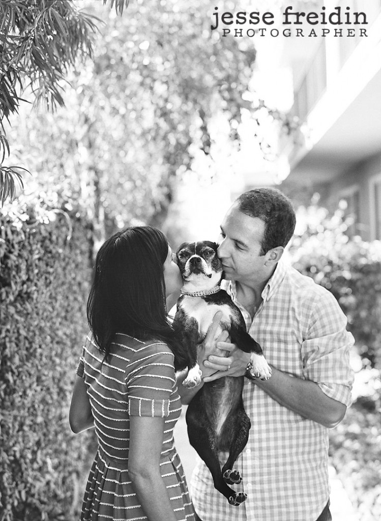 pet photography in los angeles Boston Terrier