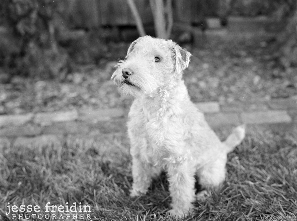 LA pet photographer black and white