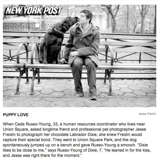New York Pet Photography