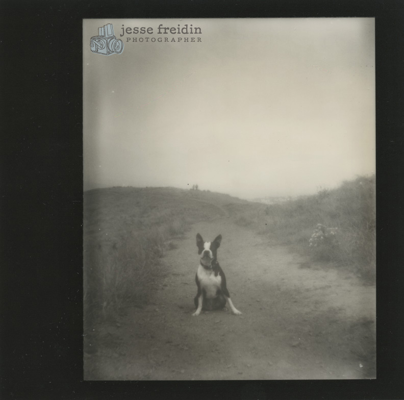 Impossible Project dog portrait