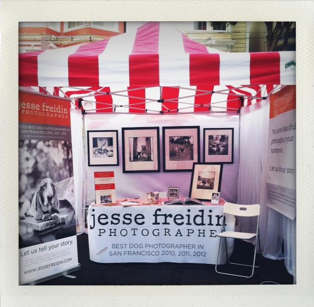 pet photographer castro street fair 2012