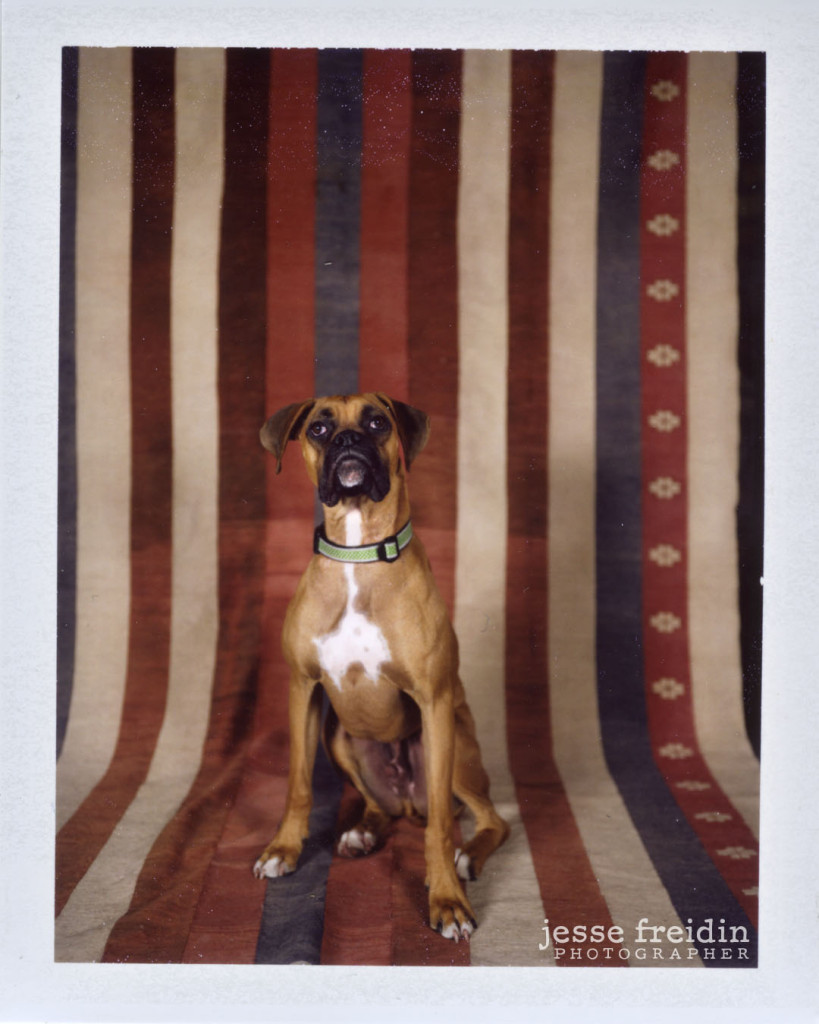 polaroid photo booth dogs