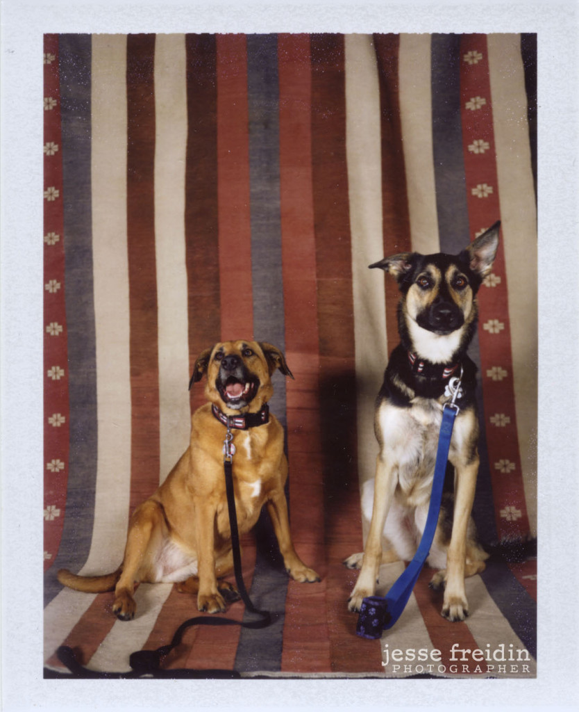 instant doggie photobooth