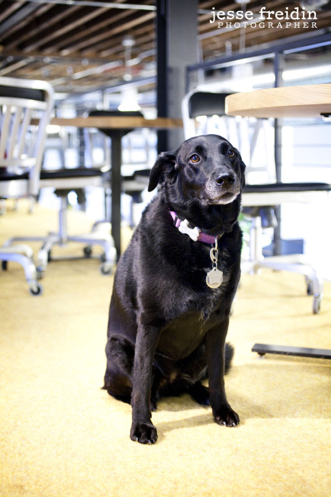 Pinterest: Dogs in the Workplace