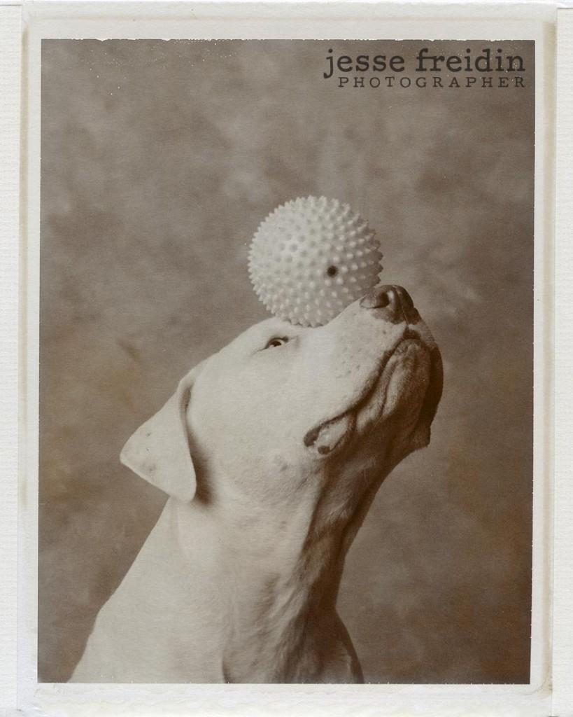 Polaroid Dog Photograph: Jesse Freidin