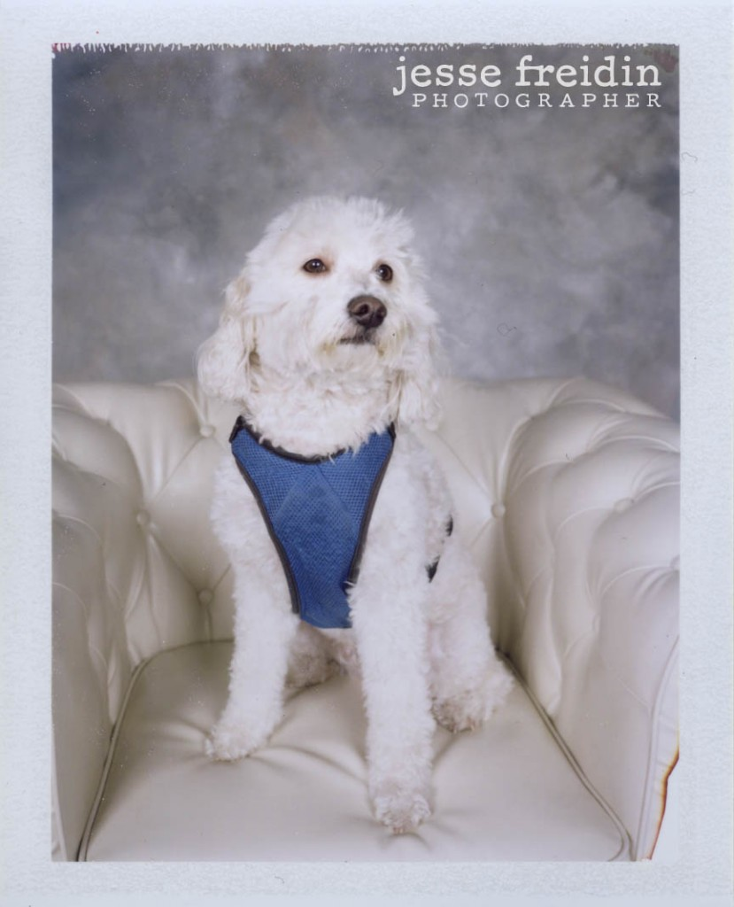 polaroid dog photography