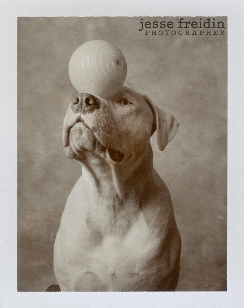 Polaroid Dog Photography: Jesse Freidin