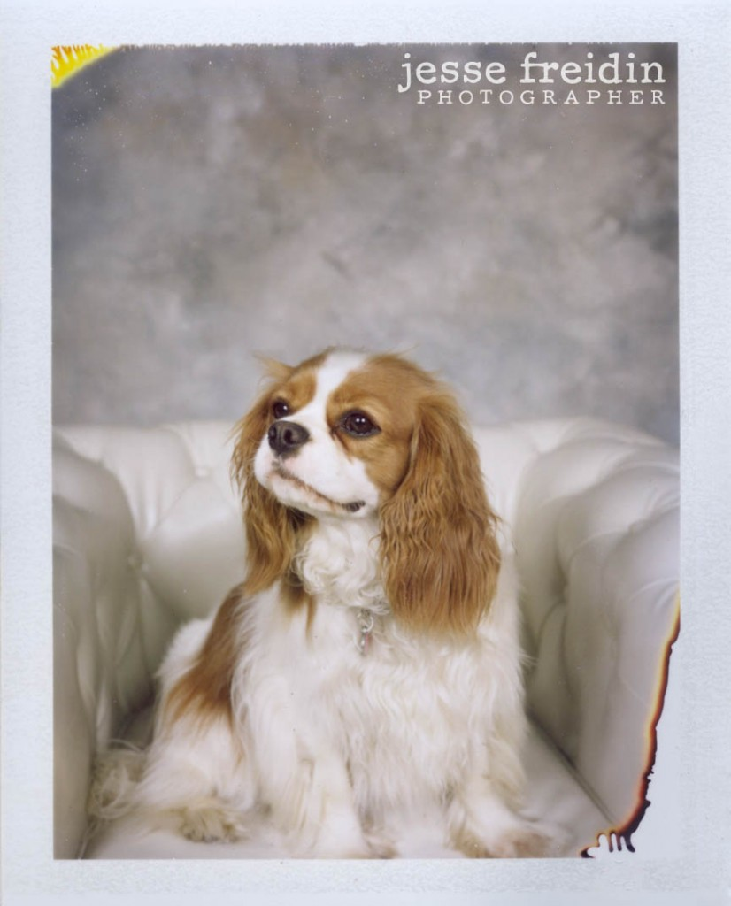 instant dog photobooth jesse freidin