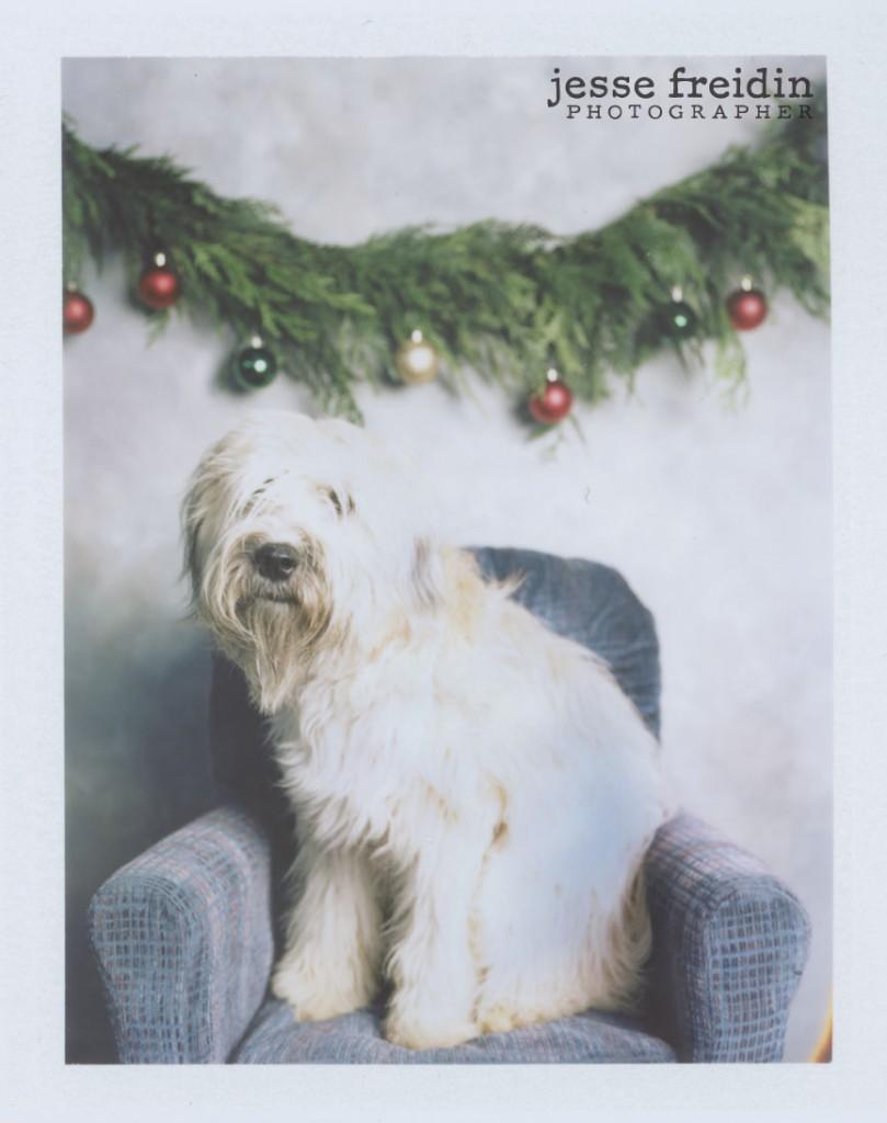 Christmas Dog Photos- Polaroid Doggie Photobooth