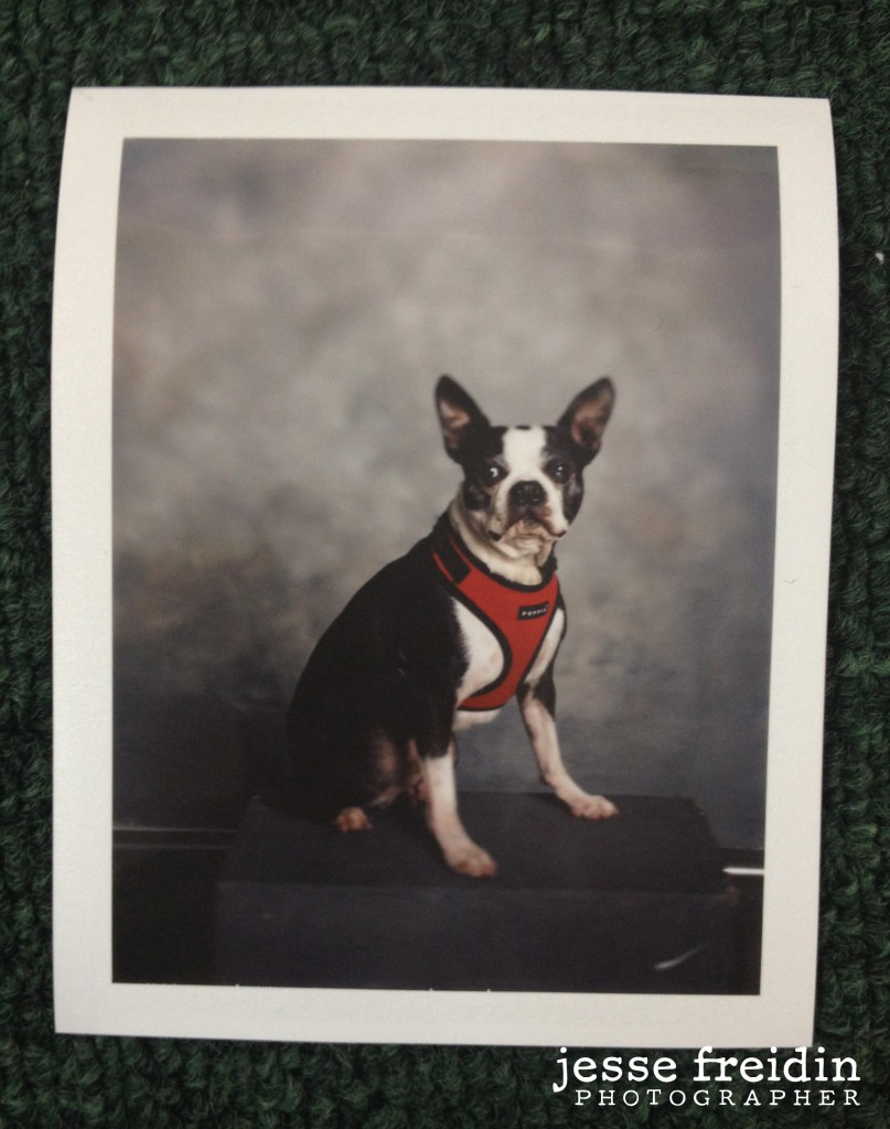 doggie photobooth with polaroid film by Jesse Freidin photographer