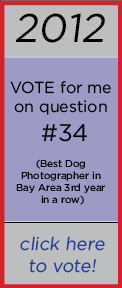 San Francisco best dog photographer