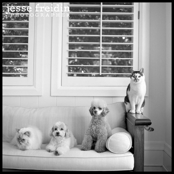 san francisco dog photographer