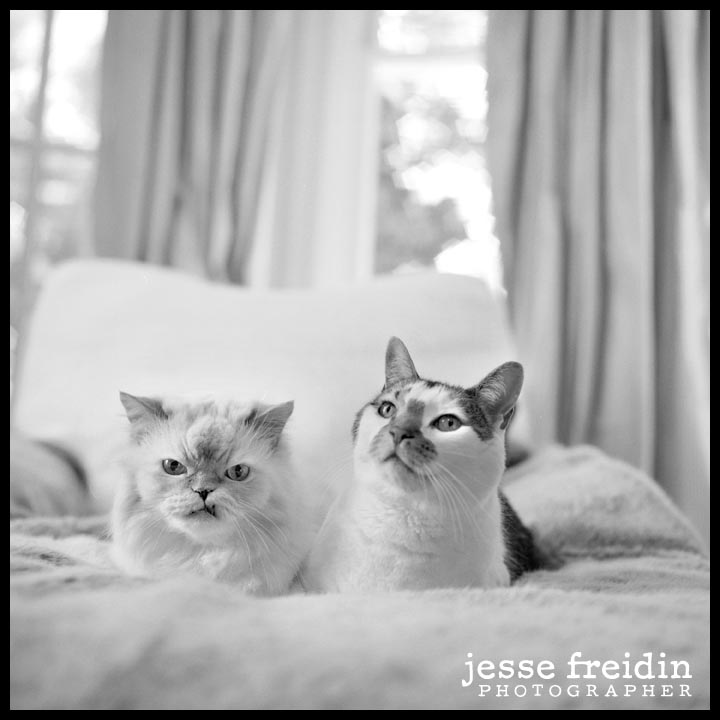 san francisco pet photographer
