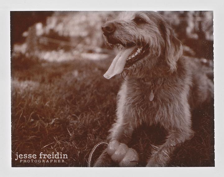 Jesse Freidin- Locals Series