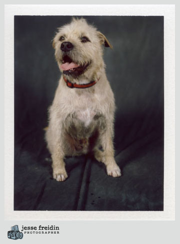 polaroid dog photographer