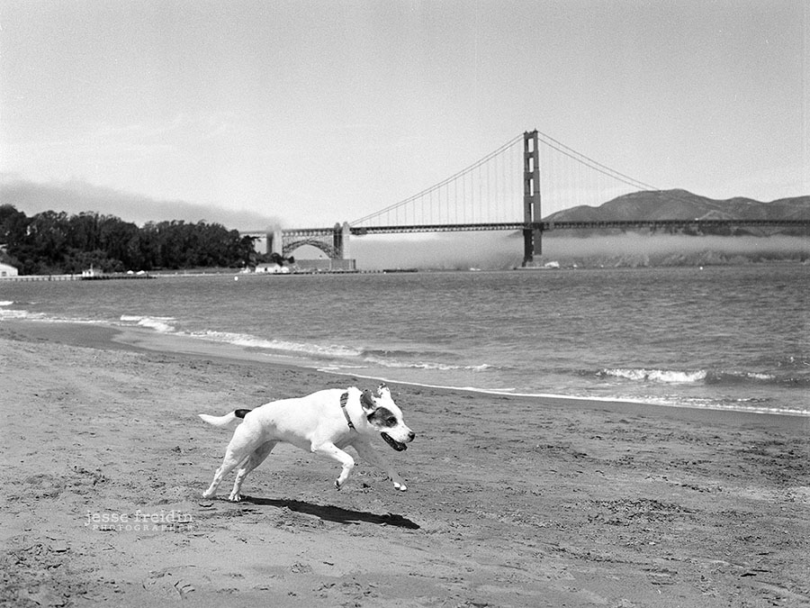 San Francisco Dog Photography at Chrissy Field