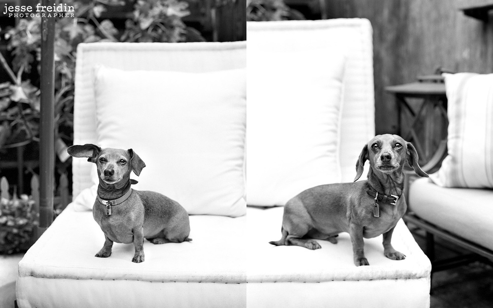 Two old Doxins photographed in San Francisco. Those ears!