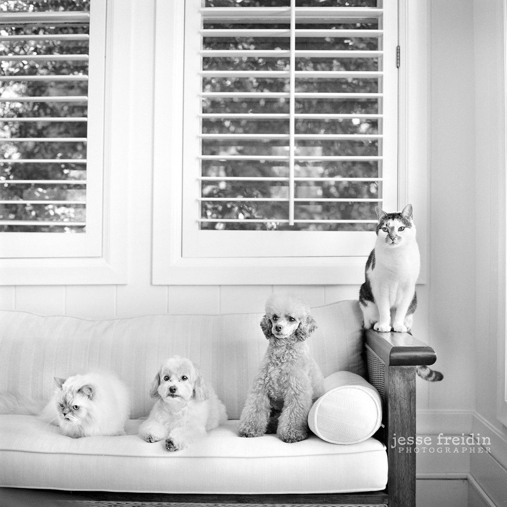 New York dog photographer Jesse Freidin
