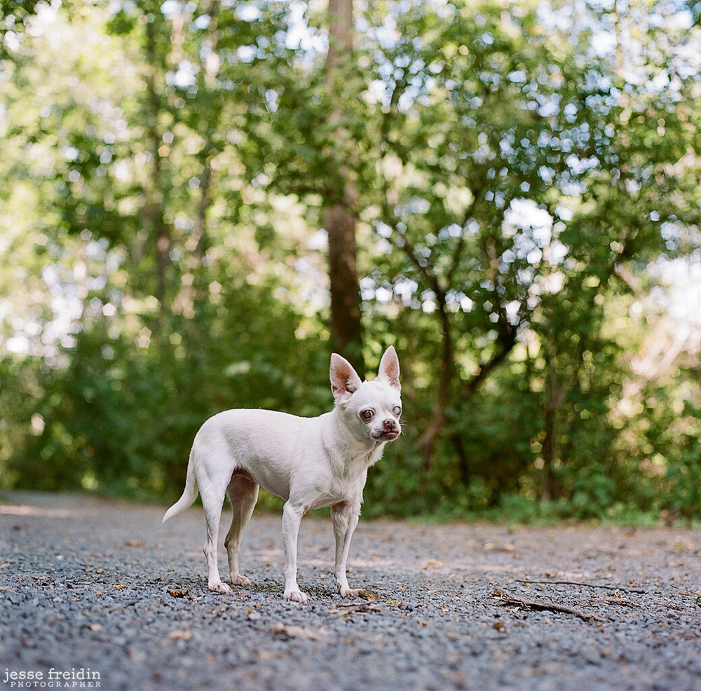Woodstock, New York dog photographer