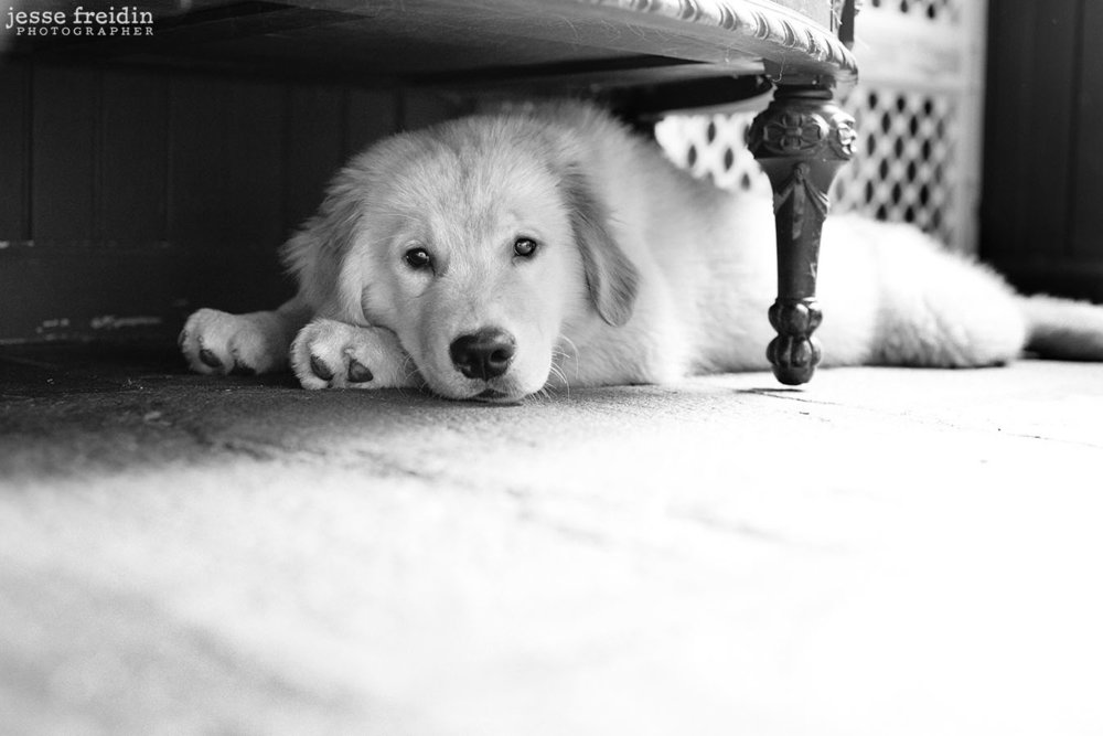 New York dog photography