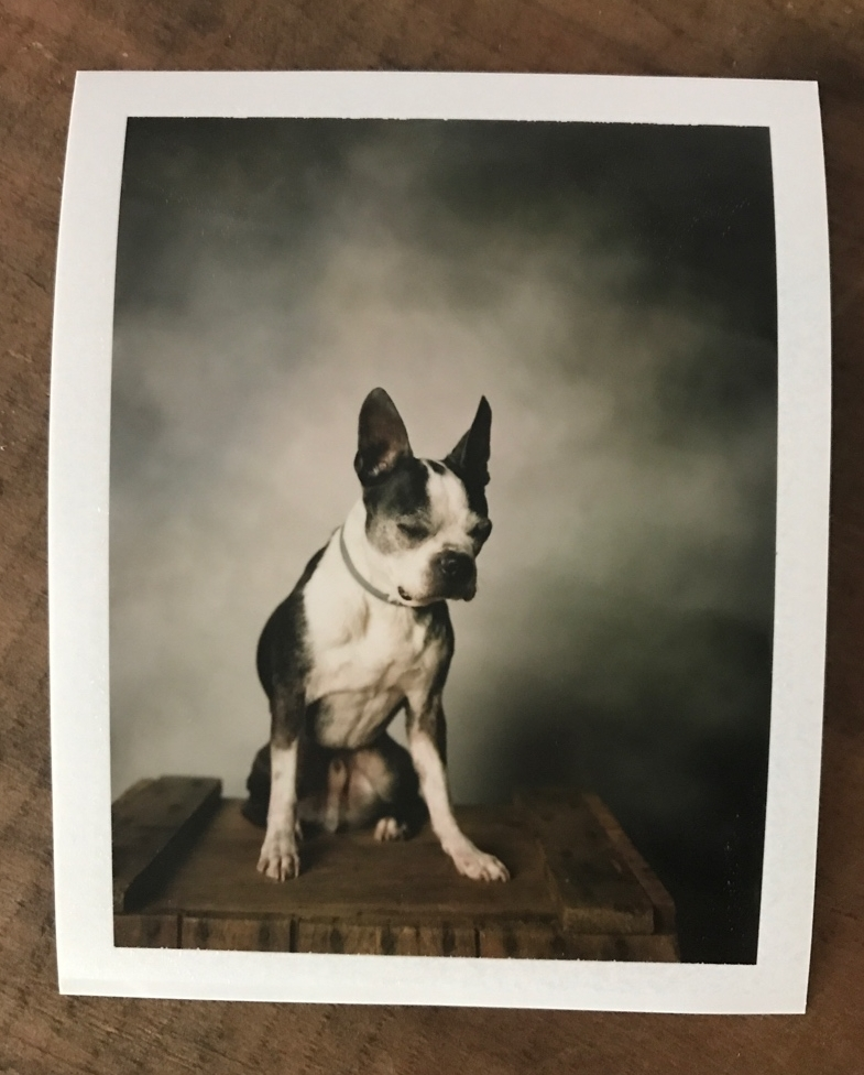 Instant Dog Photobooth