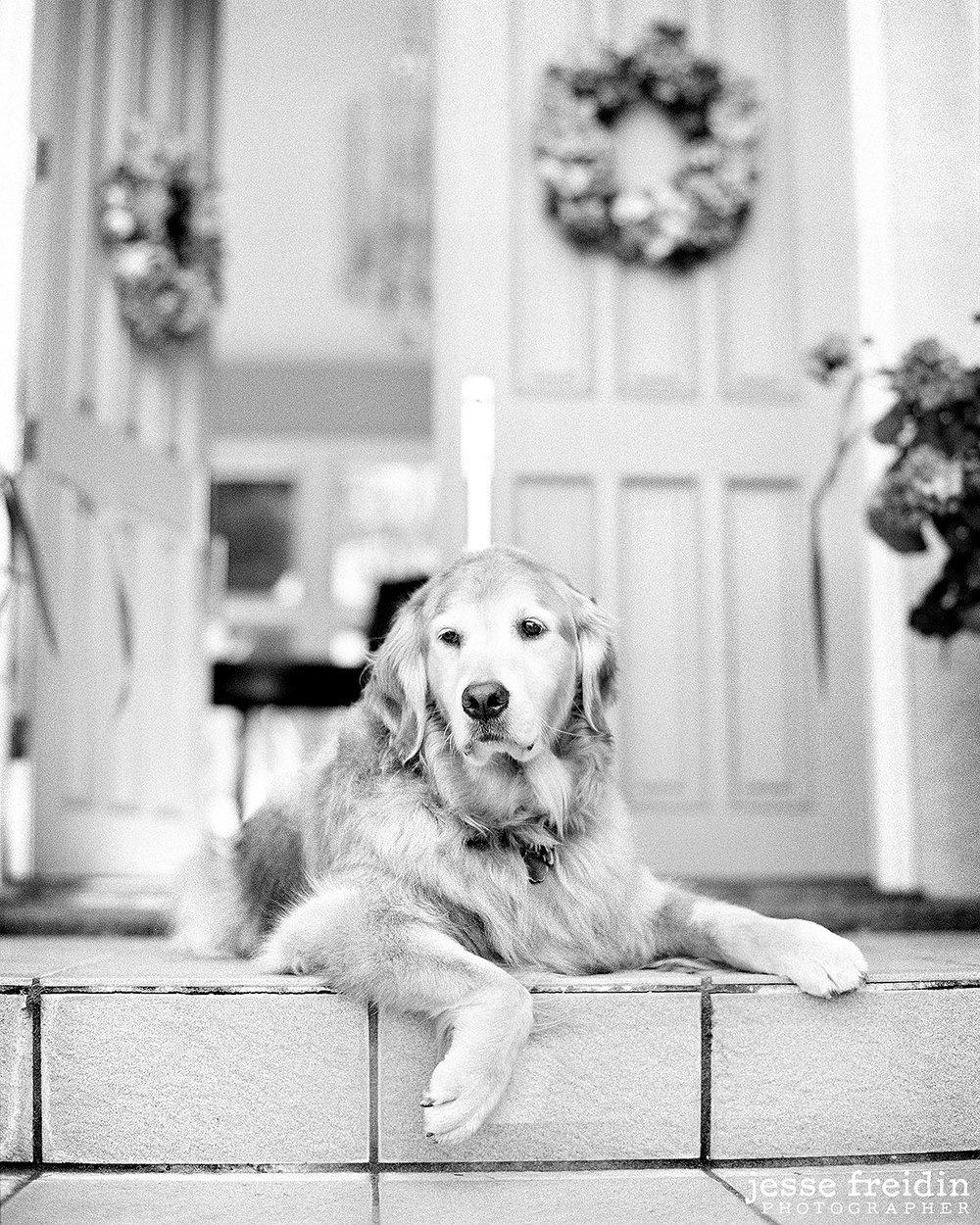 santa.fe.dogphotography.jpg
