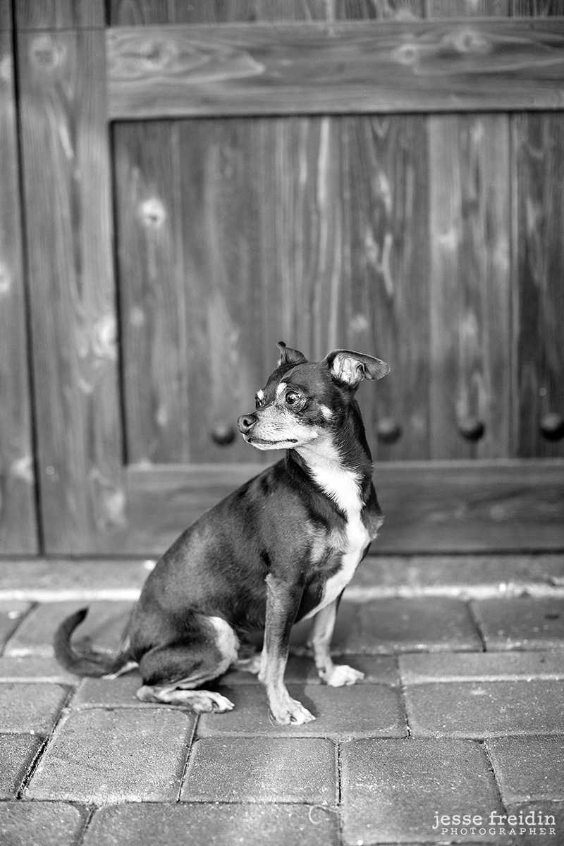 San Francisco Dog Photography