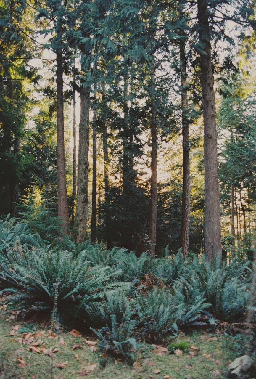 Forest trails, Bowen