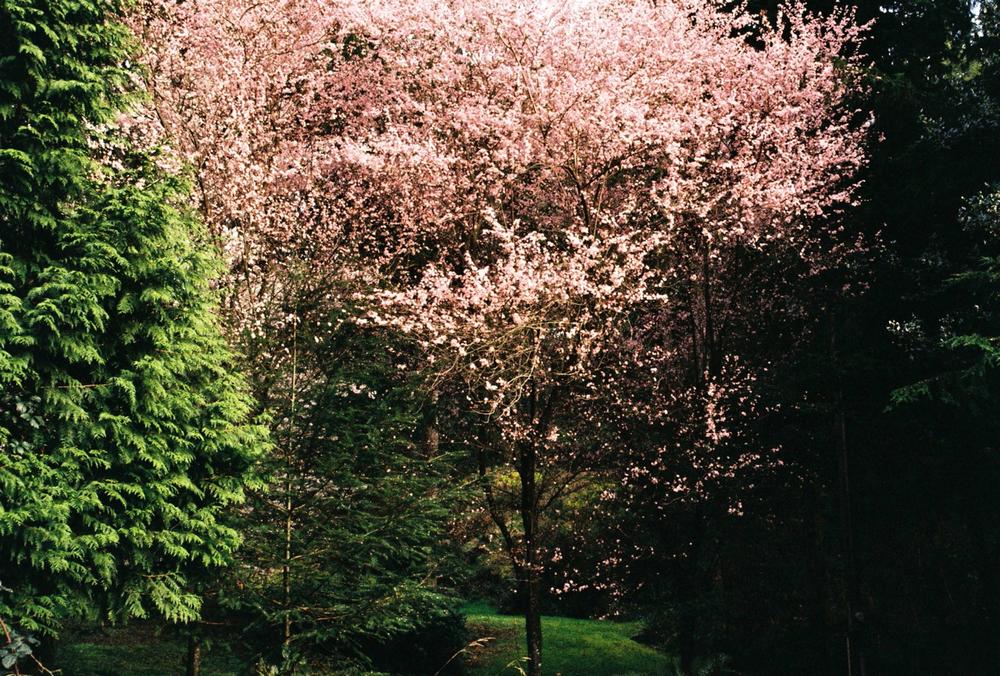 Spring, Bowen Island