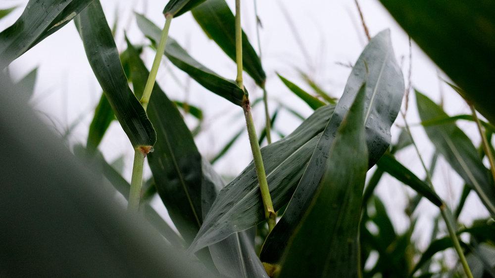 harvest (1 of 1)-6.jpg