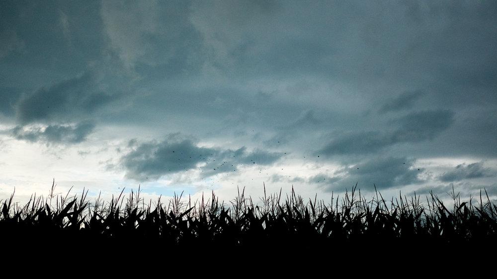 harvest (1 of 1)-8.jpg