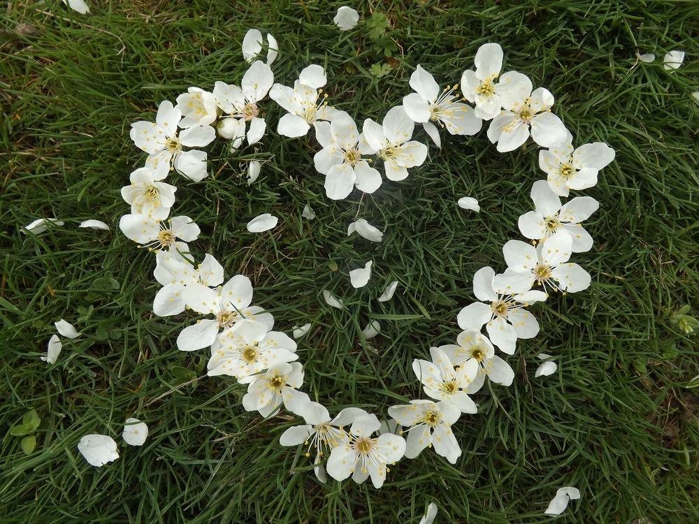 heart-1254343_1920.jpg